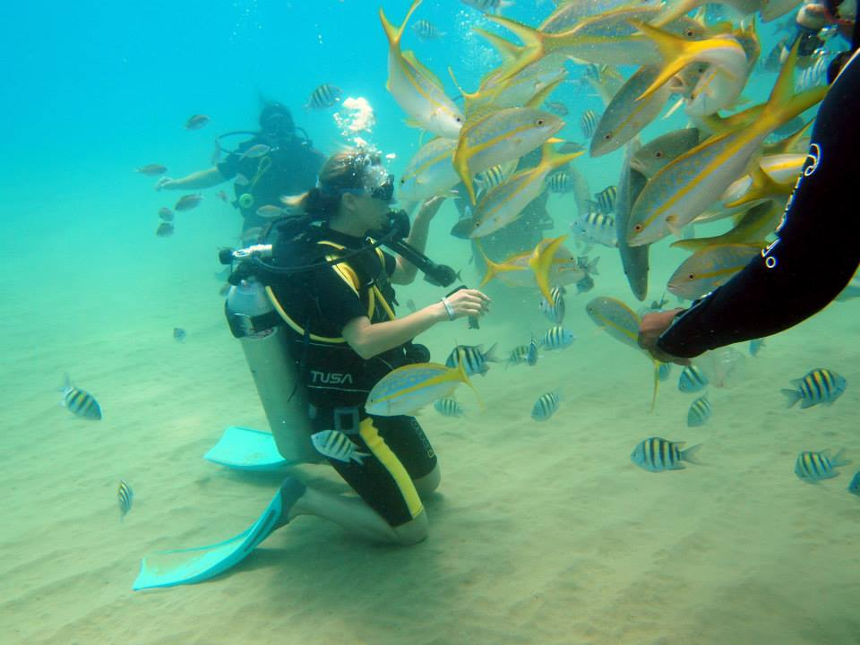Diving & Snorkelling tours
